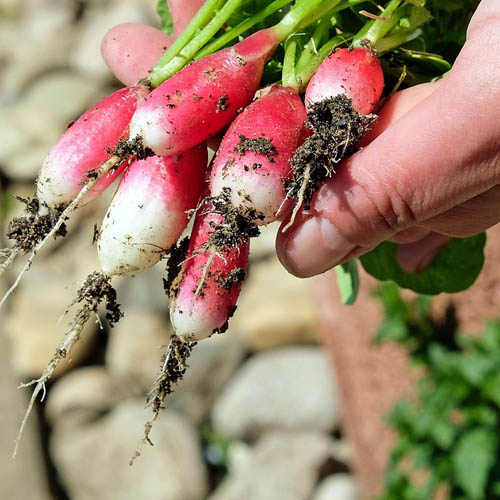 Dr Della Parker_How to Counter the Soil Depletion of Nutrients with Supplements